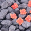 Prince of orange flowers on black zen stones — Stock Photo
