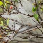 Water drops on cobweb close up — Stock Photo