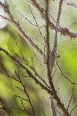 Fine cobweb on twigs and branches of a plant close-up — Stock Photo