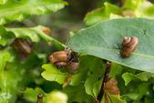 Garden snails upside down close-up — Stock Photo