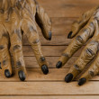 Werewolf hands for Halloween close-up — Stock Photo