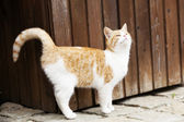 Young cat outside — Stock Photo