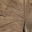 Old wood texture background, trunk od tree with cross section and wood rings — Stockfoto