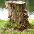 Stock Photo: Wood trunk on the grass and water background