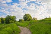 Sommar landskap. — Stockfoto