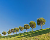Field,tree and blue sky — Stock Photo