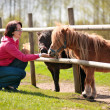 Young attractive woman feeding two ponies - Stock Photo