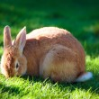 Royalty-Free Stock Photo: Easter rabbit on fresh green grass
