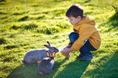 Little boy feeding two rabbits in farm — Stock Photo