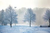 Pejzaż zimowy mroźny drzew — Zdjęcie stockowe