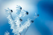 Close up of flower covered with ice and snow — Stock Photo
