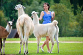 Young attractive woman feeding a group of lama — Стоковое фото