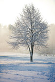 árbol de invierno escarchado — Foto de Stock
