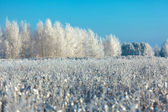 Frosted trees and grass against a blue sky — Stock Photo