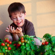 Cute little boy with homegrown cherry tomatoes - Stock Photo