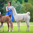 Stock Photo: Young attractive womfeeding two lamas