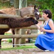 Stock Photo: Young attractive womfeeding group of lama
