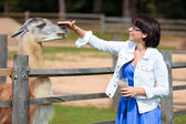 Young attractive woman feeding lama — Foto Stock