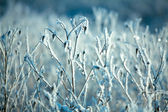 Hoarfrost on branches of bushes — Stockfoto