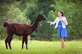 Young attractive woman feeding a brown alpaca — Stok fotoğraf