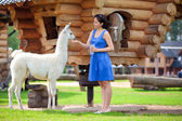 Young attractive woman feeding a white lama — Stok fotoğraf