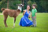 Mladá žena a její malý syn krmení dítěte lama — Stock fotografie