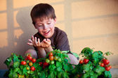 Cute little boy with homegrown cherry tomatoes — Stock Photo