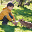 Little boy feeding rabbit in farm — Stock Photo #40024773