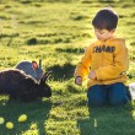 Little boy feeding two rabbits in farm — Stock Photo