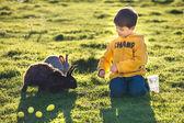Liten pojke utfodring två kaniner i gård — Stockfoto