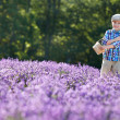 Cute little boy with basket in lavender field — Foto de Stock