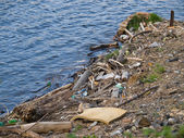 Waste on riverbank — Stock Photo