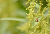 Ladybug in the garden — Stock Photo
