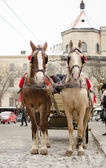 Horses and carriage in Lviv — Stock Photo