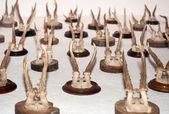 Herten jachttrofeeën — Stockfoto