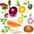 Royalty-Free Stock Vector Image: Set vegetable. root.
