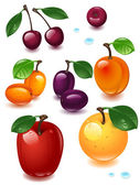 Fruits set — Stock Vector