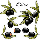 Set of black olives — Stock Vector