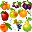 Set of  fruit - Stock Vector