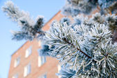 Pine branch in the snow on the building background — Stock Photo