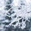 Branches covered in snow and ice crystals — Stok fotoğraf