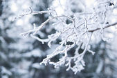 Branches covered in snow and ice crystals — Stock Photo