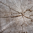 Cut Tree Stump - Stock Photo