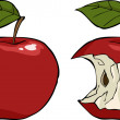 Apple core — Vector de stock #14813309