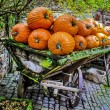 Large pumpkins — Stock Photo #33431139