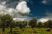Ağaçlar ve bulutlar — Stok fotoğraf
