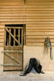 Stable — Photo