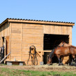 Stock Photo: Horses stable