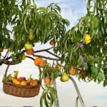 Fruiterer three — Stock Photo