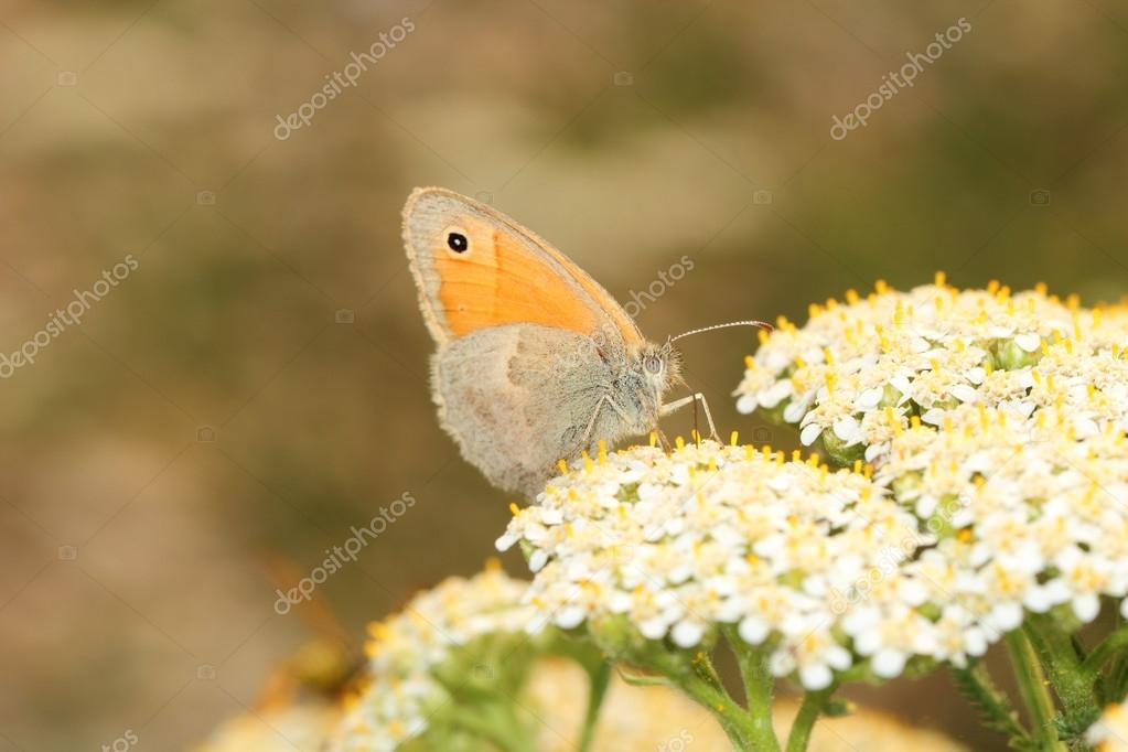 Butterfly — Stock Photo #12852053